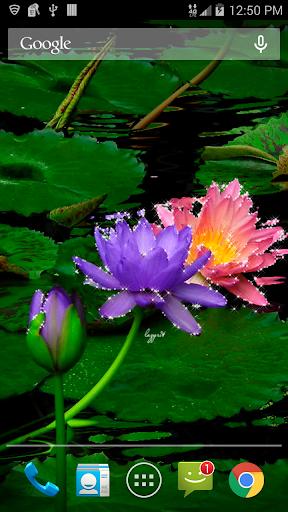 Colored Lotus Flowers LWP