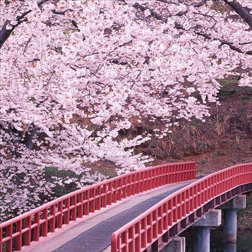 個人化必備App|Live Wallpaper Japanese Bridge LOGO-綠色工廠好玩App