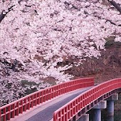 Live Wallpaper Japanese Bridge