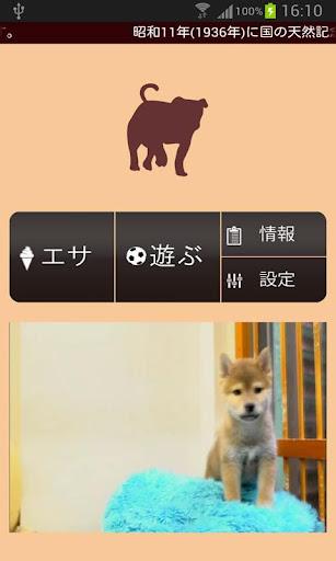 【無料育成】ポケット哺乳類(イヌ)~柴犬~
