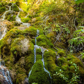 Mossy Fall by Derrick Leiting - Landscapes Waterscapes ( water, trickle, mountain, glenwood, green, colorado, lake, beauty, hanging, tranquil, trail, summer, mossy, hike )