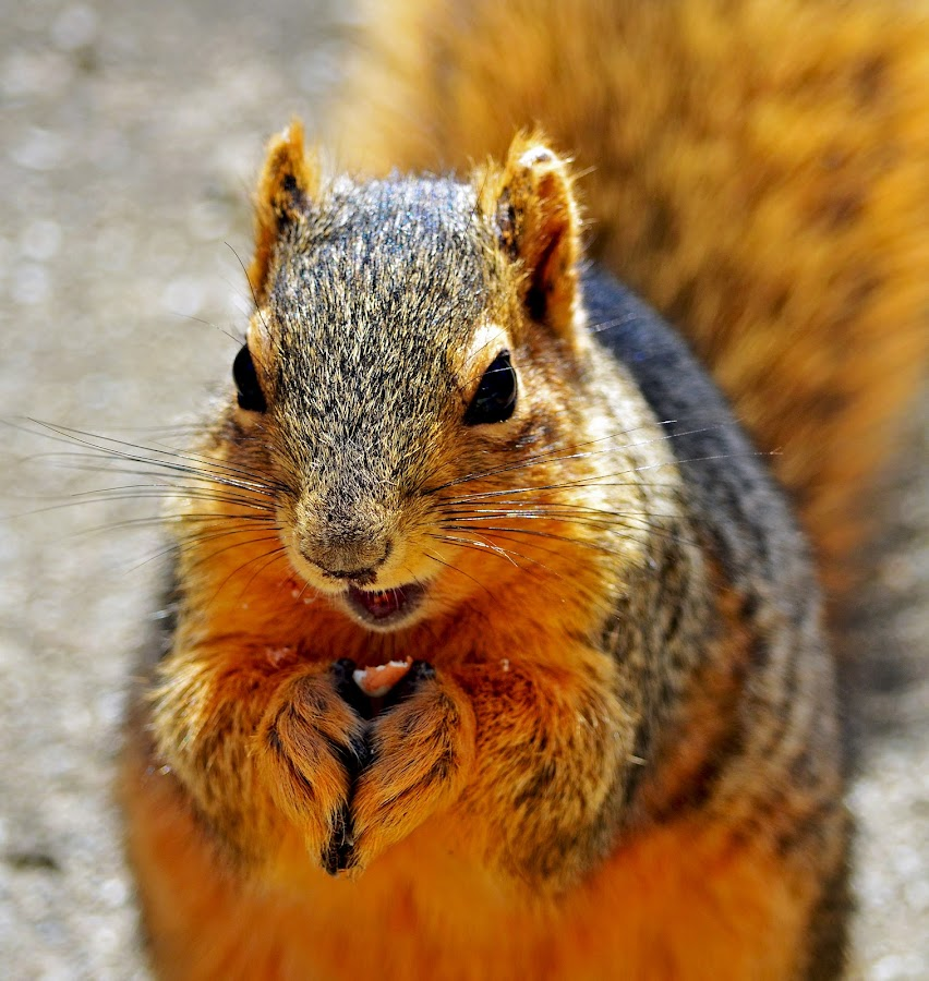 Squirrel having a snack by Naveen Naidu - Animals Other Mammals (  )