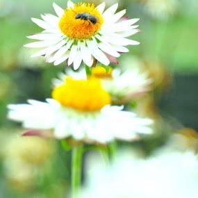 buuuuuuzy day by Suryani Sabri - Nature Up Close Gardens & Produce (  )