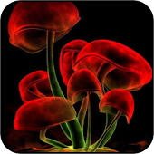 Magic Mushroom Wallpapers