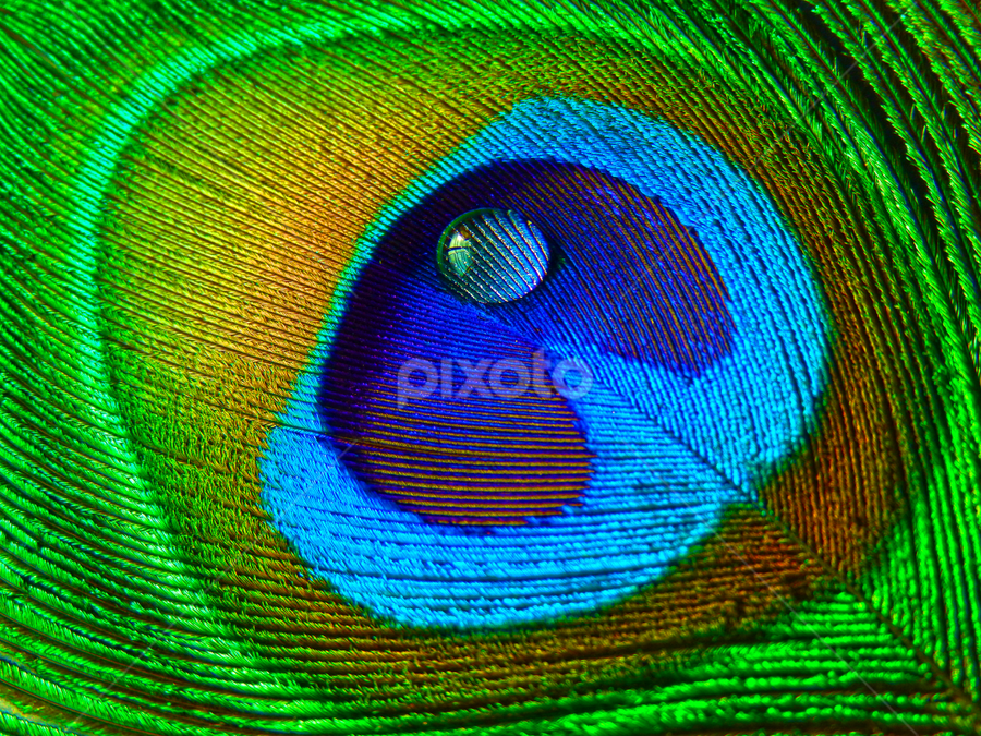 Colored Feather ... by Soumik Nandi - Nature Up Close Natural Waterdrops (  )