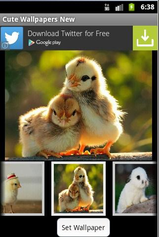 Cute Wallpapers New