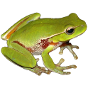 Frog Power icon