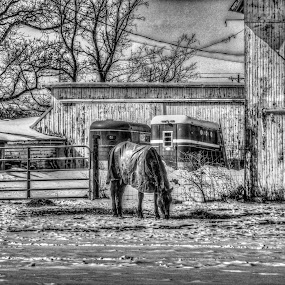 On The Farm by Judy Soper - Black & White Buildings & Architecture ( farm, hay, horse )