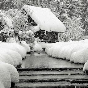 real winter by Anže Papler - Black & White Landscapes
