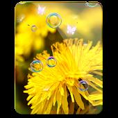 Dandelion n Romance Bubble 3D