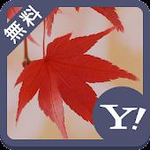 紅葉、日本の秋【壁紙画像 無料きせかえ】buzzHOME