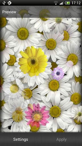 雏菊动态壁纸