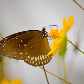 Wild flowers by Kavindu Anthony - Flowers Flowers in the Wild ( butterfly, wild, flower and butterfly, nature, sri lanka, flower )