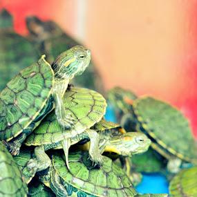 Staying Together by Diadjeng Laraswati H - Animals Amphibians (  )