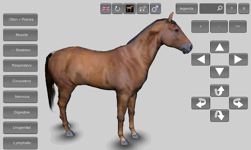 3d Horse Anatomy Software Free Download For Pc - bertylfurniture
