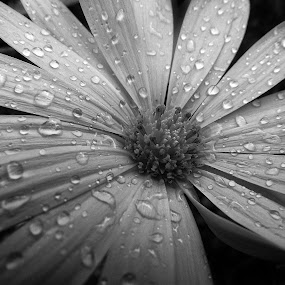 Early Morning Surprise  by David Morris - Black & White Flowers & Plants