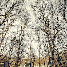 by Massimiliano Giuliani - Landscapes Forests