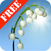 Lily of the Valley FREE