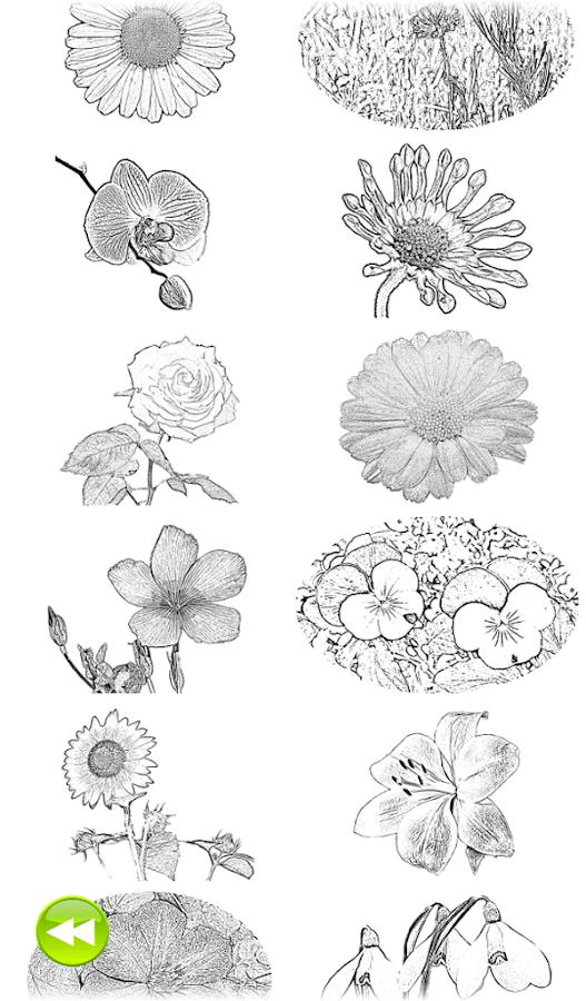 Sketch Coloring Book Flowers Screenshot