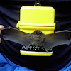 island bat