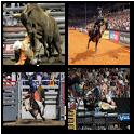 Bull Riding Live Wallpaper icon