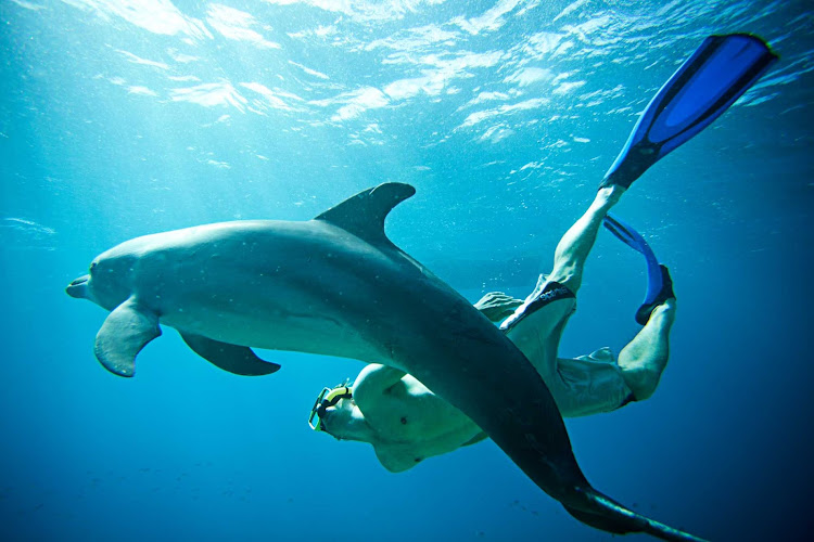 The Curacao Dolphin Academy offers six different programs to interact and swim with these gentle animals.