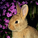 Big Bunny Wallpaper-Galerie icon