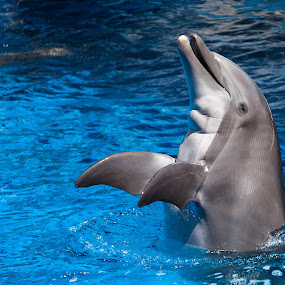 Dolphin Dance by Shelley Patterson - Animals Sea Creatures ( water, dolphin, sea life, gulfarium )