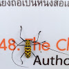 Long-horned Borer Beetle