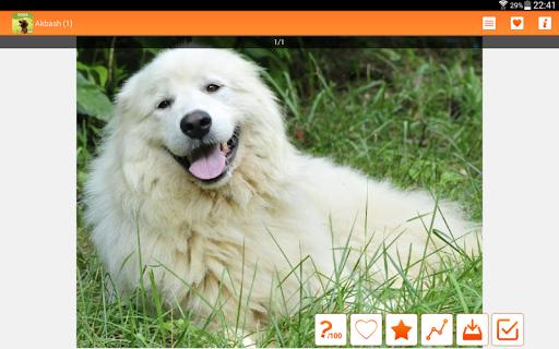 玩個人化App|Dogs wallpapers HQ免費|APP試玩