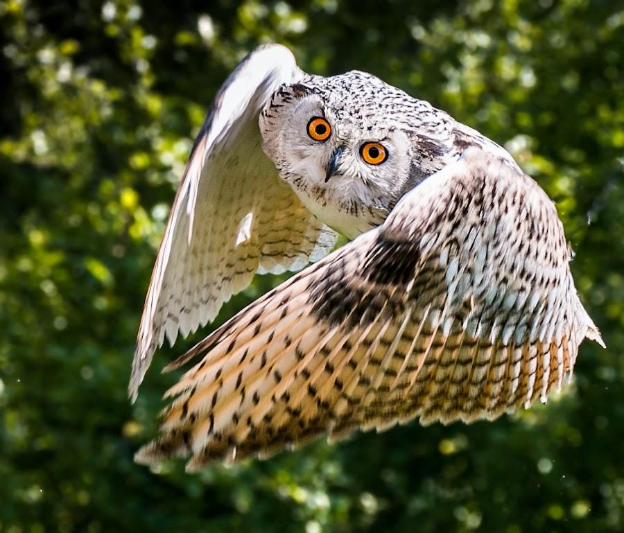by Renos Hadjikyriacou - Animals Birds ( , bird, fly, flight )