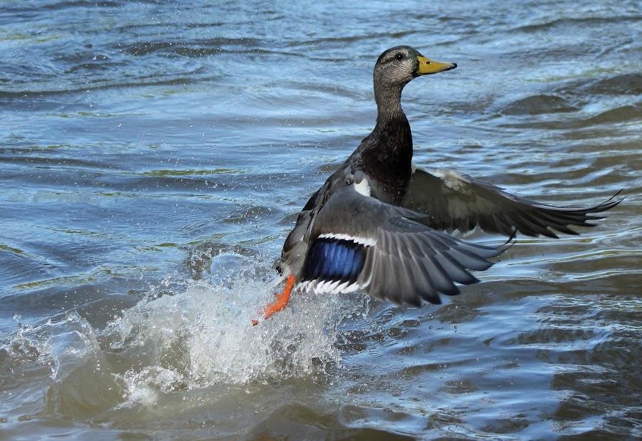 by Mark Morse - Animals Birds