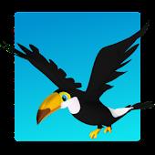 Rocket Birds Arcade