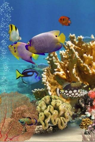 3D Aquarium Live Wallpaper HD - screenshot