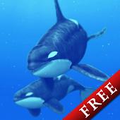 Cetacea Trial