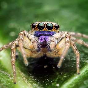 look me by Robert  Fly - Animals Insects & Spiders ( macro art, macro, macrophotography, spiders, spider, eight, eight leg,  )