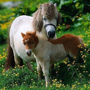 Horses Jigsaw Puzzles - screenshot thumbnail
