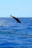 Screenshot of Playful Dolphin Live Wallpaper