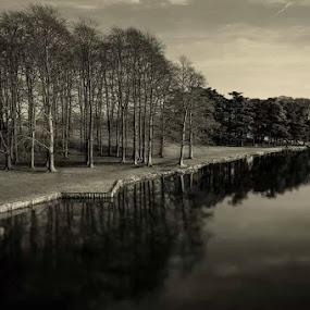 Beech trees at Blenheim by Karen Buttery - Black & White Landscapes ( calm, trees, lake, landscape, beech )