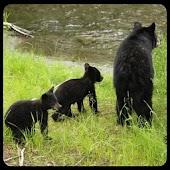 Alaska Critters Free