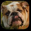 Bulldog Live Wallpaper icon