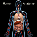 Human Anatomy icon