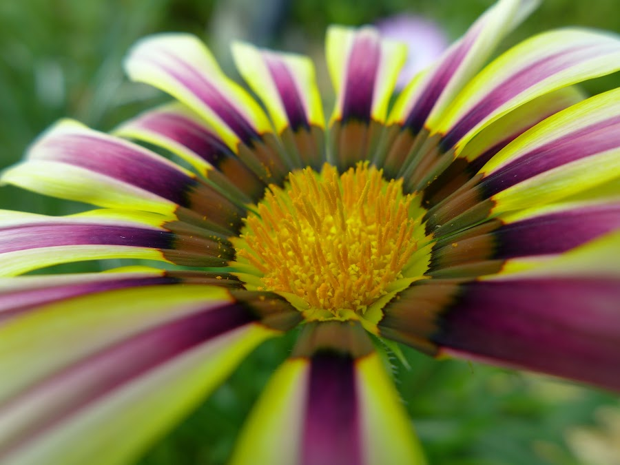 Close and personal by Marcus Chua - Flowers Single Flower