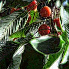 by Nat Bolfan-Stosic - Nature Up Close Trees & Bushes ( cherry, sweet, red, tree, backyard )