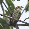Yellow-vented flowerpecker