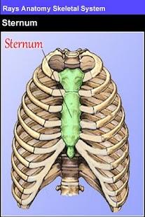 Rays Anatomy Skeletal System- screenshot thumbnail
