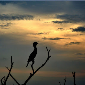 ** by B Thottoli - Landscapes Travel ( silhouette of birds,  )
