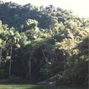 Atlantic Forest Island Vegetation