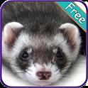 Ferret+ Free icon