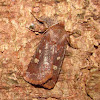 Reddish-speckled Dart
